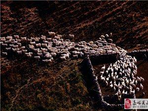 高原牧羊四部曲