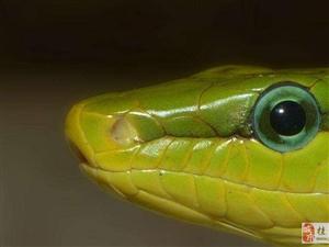 澳门网上投注游戏:夏季蛇出没频繁, 医生给出8字建议
