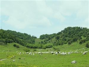 视频―― 关山牧场(1080P)