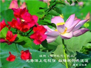 王裕超摄影作品:组照《梅荷之恋》