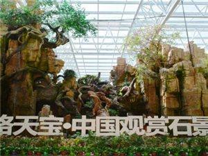 千赢国际|最新官网富康丝路天宝·中国观赏石景园