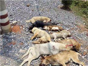 新宁狂犬病男子与狂犬病女孩的逝去引发热议!政府终于做出一件实事!