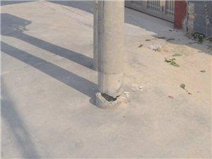 【危险】柳堤西路电杆树断近两年无人管,市民出没请注意!