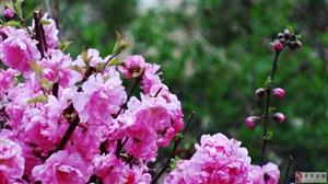 ◆〓◆〓◎春◎〓◆〓◆