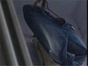 牛仔裤晾阳台一个月忘收,裤裆上惊现鸟巢