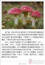 谨防野生毒蘑菇中毒风险