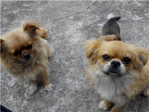 喜欢需要小宠物狗狗的朋友注意啦