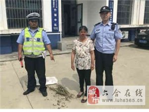 妇女车内携带十多粒罂粟壳被查 自称是喂猪