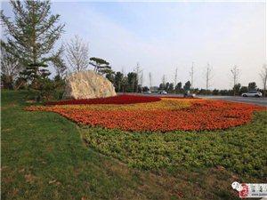 """莒县""""沭东绿肺""""计划,总投资9500万,面积约700亩!"""