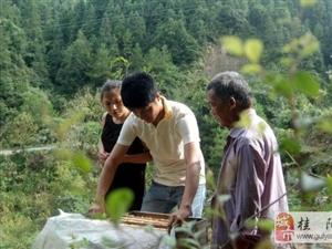 大学生村官夫妻扎根深山 在稻田拍婚纱照