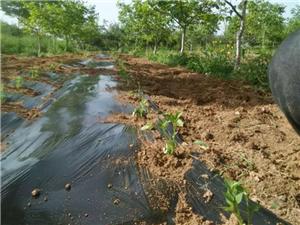北伍中创新发展林下经济闯出产业扶贫新路