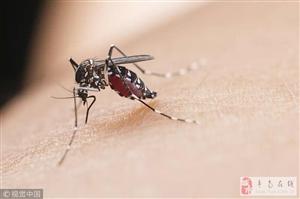 家里蚊子到底哪来的?哪里最多?看完这条,蚊子少一半!