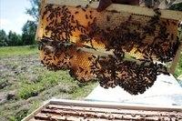 开化土蜂蜜