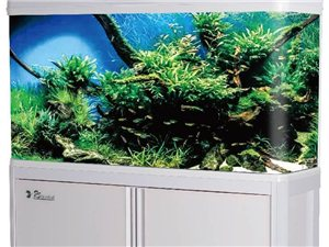 水族箱鱼缸