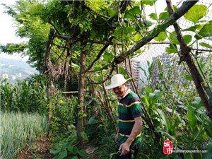 旬阳有块植物园――参观刘会长植物园舒情诗一首