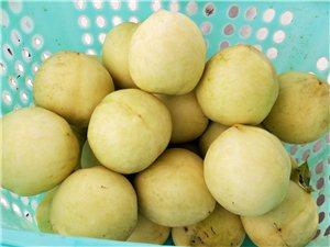 新品种,白如玉桃5元/斤采摘,永顺远发生态农场又一波福利来了!