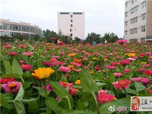 陕西理工大学校园内已经花开成海