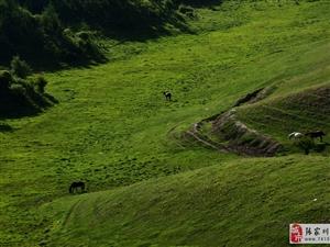 【大美张家川】白石咀牧场,留下夏天最美的回忆