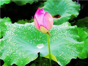 美爆了!龙寿洋的夏雨荷