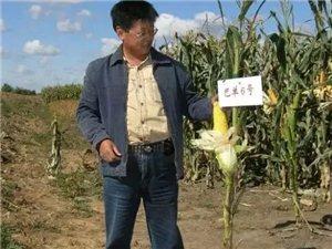 【巴彦网】于春:在希望的田野上 ―记全国劳动模范、农民育种家刘焕奎