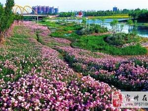 宿州:漫步新汴河 如在画中游