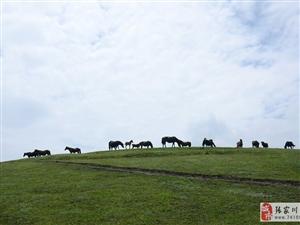 白石咀牧场奔腾的骏马突然静下来的感觉有些神秘