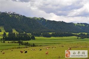 带你一路向西去了解正真的新疆