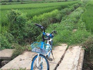 水沟发现单车一枚,顺手捞起来。