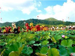 陆河县举办第二届荷花节