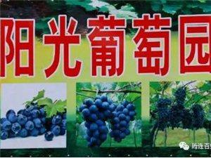 """筠连这里的葡萄真的要把人""""吃醉""""!想去摘葡萄儿的快来报名了"""