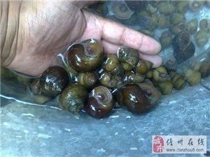 儋州好吃的丨夏天,享受田螺季节