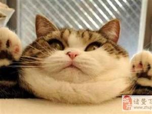 网友:这种长猫的裤子哪买的