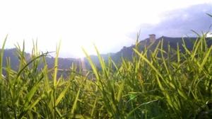 """夏日即景!来自丰都县城江对面一抹""""绿""""的凝望~~"""