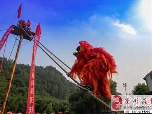 澳门威尼斯人官网景区13米高台上演狮王争霸,惊险刺激!