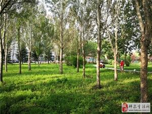 澳门太阳城网站城市绿色的一角