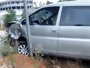化州一头黄牛被商务车失控撞飞,车头严重损毁...