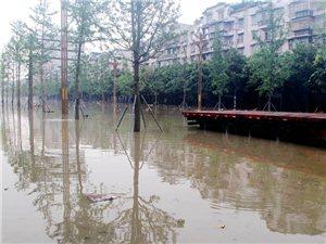 7月11日下午6点,广汉市深圳路水情实况图图~~~嗯,确实可以划船了