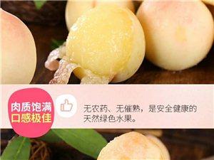 奉化水蜜桃14号到澳门大发游戏网站,澳门大发游戏网站的亲们可以吃到正宗的奉化水米桃了哦
