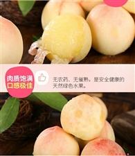 奉化水蜜桃14号到开化,开化的亲们可以吃到正宗的奉化水米桃了哦
