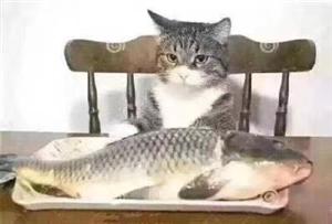 一条猫看到竟然发了愁,你猜是怎么回事??(文学原创)