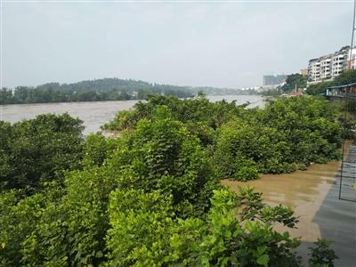 富顺特大洪水2018专题报道