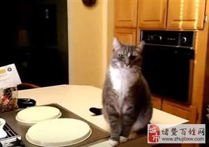 一只有家教的绅士猫?#33322;?#23427;名字就会点头示意