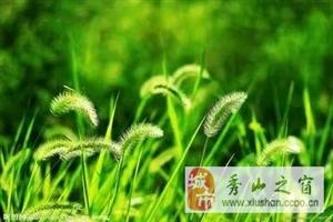 没有缤纷的绿草人生……爱心志愿者