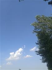 今天杞县的天真蓝,蓝得有点...
