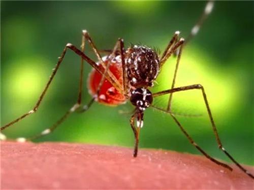 扩散!永川发现一例传染病,严重可致命!