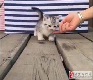真佩服现在的宠物,就算是轻轻的碰一下,都能被碰瓷