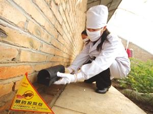 注意!7月19日至23日儋州统一投放老鼠药集中灭老鼠!