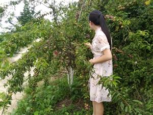 亲子游|摘李子、赏花、吃特色农家饭......这个夏天不一样!