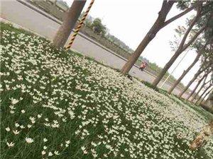 携人生好友,骑共享单车,游三星堆绿道,享沿途风景(图片)