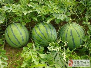 夏天到了,教你如何正�_地吃西瓜?